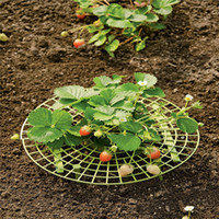 Wholesale Handy strawberry supports for your garden keep strawberries off rot in the rainy days random Color