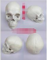 modelo de tamaño natural esqueleto al por mayor-Venta al por mayor-blanco 1: 1 modelo de cráneo humano de resina de tamaño natural modelo de cráneo que enseña el modelo de esqueleto humano envío libre