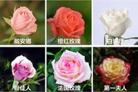semillas de variedad al por mayor-Beautiful New Varieties Rose Flower Seeds 50 Semillas por paquete Envío gratis Home Garden
