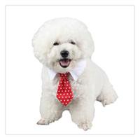collar del gato corbata de lazo al por mayor-Nuevo pequeño perro gato mascota raya corbata corbata cuello blanco elegir muchas clases de color envío gratis
