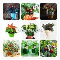 Wholesale Bell Peppers Seeds - 50 PCS Mixed Pepper seeds 10 Color Yellow Purple Red Green Blue White Sweet Bell Hot Pepper Seeds vegetables Paprika So Healthy For Body