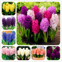 Wholesale rare beautiful flowers - 100 Pcs bag Hyacinth Seeds Perennial Rare Beautiful Flower Seeds (Not Hyacinth Bulb) Holland Hydroponic Flower For Home And Garden