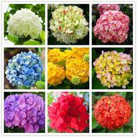 ortanca bitkiler toptan satış-20 adet / torba Ortanca Çiçek Tohumları karışık renk Bonsai Kale Viburnum Ortanca Macrophylla Bonsai Bitki Tohumları ev bahçe için
