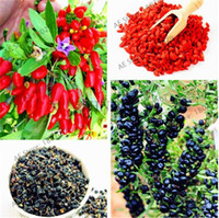des baies achat en gros de-120 pcs / sac Heirloom Chinois Wolfberry Graines Biologique Lycium Fruit Bonsaï Plante Juicy Goji Baies Arbre Ornemental pour Jardin