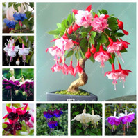 Wholesale fuchsia flower seeds - 100 pcs bag fuchsia seeds, fuchsia flower, bonsai Hanging flower seeds, potted plant Lantern Begonia seeds for home garden