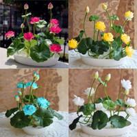ingrosso irrigazione bonsai-10 pz / pacco Ciotola Semi di loto Piante idroponiche Piante acquatiche Semi di fiori Semi di ninfea Fiori d'acqua Giardino bonsai