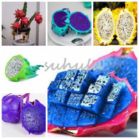 Wholesale dragon fruits for sale - Group buy New Bag Kinds Rare Pitaya Seeds Sweet Dragon Fruit Seeds Very Delicious Healthy Fruit Sementes Potted Plants For Home Garden
