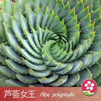 Wholesale chinese planting pot - 100 Pieces Bag Best-Selling South Africa Succulent Seeds Rotate Aloe Seeds Bonsai Plants Home Gardening Flower Pots Balcony Flower Seed