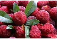 Wholesale Unique Fruit - 30%OFF 100 Pcs Arbutrus Seeds,Taste sweet seeds,Myrica Rubra Seed,Red Bayberry,China Unique Fruit