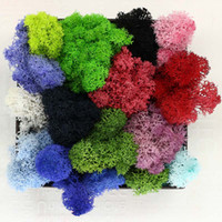 Wholesale Wholesale Moss - 500g DIY Multicolor Moss Flowers Never Withers Floral Materials Microscopic bonsai For Home Wedding Party Decor WX9-478