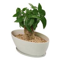 kapalı bonsai çiçekli toptan satış-MUZHI Uzun Oval Modern Minimalist Etli Bonsai Ekici Tencere ile Tepsi, Biodegradable Bambu Fiber Saksı Pencere Kapalı Dikim için