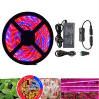 espectro completo led tira de cultivo al por mayor-Plantas Crecer luces Full Spectrum LED Strip Crecer luz Flor phyto lamp 5m Waterproof Rojo azul 4: 1 para Greenhouse Hydroponic + Adaptador de corriente