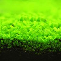 ingrosso aquatic plant-Acquario piante semi di erba acqua semi di piante acquatiche pianta ornamentale coperta erba per giardino di casa