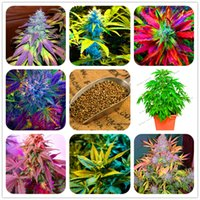 Wholesale Flowers Seeds - 100pcs Hemp Seeds Organic Herb food,A healthy seeds vegetables,Perennial Flower seeds planta plante for home garden