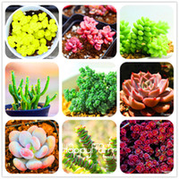 Wholesale Plants Office - New Seeds 2018!99 Kinds Rare Succulents Seeds Lithops Seeds Pseudotruncatella Office Bonsai Plants Flower Seed 100 PCS Bag,#M0EH