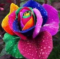 çiçek tohumları holland toptan satış-150 Adet / paket Için Beauitiful Bonsai Çiçek Tohumu Holland Gökkuşağı Gül Tohumları Ev Bahçe