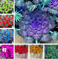 Wholesale wood flowers wholesale - 100 Pcs Oxalis Wood Sorrel Flower Oxalis Purple Shamrock Clover 100% Real Flower Bonsai Seeds Perennial Outdoor for Home Garden