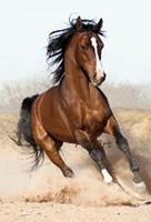 ingrosso pittura a olio di cavalli d'arte-cavallo dipinto a mano su tela wall art animale su tela moderna olio appeso a parete decorazione casa arredamento presente