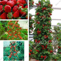 Wholesale fruit trees planting - 100 pcs Red Climbing Strawberry Tree Seeds Exotic MultiColor Strawberry Seed Fruit Seeds for Garden Bonsai Farmer Indoor Plants