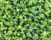 ingrosso tappeto erboso-Green Wall UV artificiale erba tappeto indoor / outdoor 60cmx40cm Falso erba decorazione Boxwood naturale realistico Looking Garden prato 125-8010