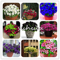 Wholesale glory flower - Big Promotion! 100 Pcs Bag Rare Color Star Petunia Seeds Mix Color Garden And Patio Potted Plant Morning Glory Flowers Seeds Garden Plants