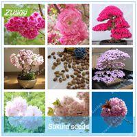 zierblumen großhandel-Günstigstes 20 Stücke Japanische Bunte Sakura Samen Bonsai Blume Kirschblüten Kirschbaum Zierpflanze