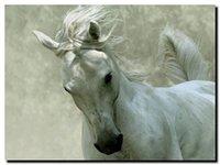 pintura al óleo lienzo caballo blanco al por mayor-Caballo blanco enmarcado, pintura al óleo pintada a mano de alta calidad del arte de la pared del animal en la lona varios tamaños A101
