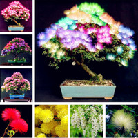 Wholesale Tree Pots Wholesale - Bonsai Albizzia Seeds 20 Pcs Mixed Heirloom Flower Seeds Acacia Tree Shrub Potted Plant Gorgeous Fragrant Flower Seeds Free Shipping