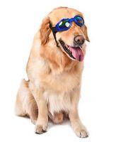 dog sunglasses al por mayor-Venta al por mayor Pet Shop Gafas de sol para mascotas Charm Dog Gromming Goggles Accesorios para mascotas Vístete como Cool Fashion Oversized acolchado
