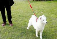 pelo de oso de peluche al por mayor-Correa de perro arnés arnés collar de mascota cadena de cuerda de perro pelo dorado oso de peluche suministros para mascotas