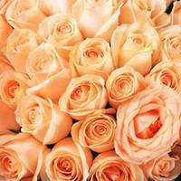 ingrosso piante di semi di giardino-Spedizione gratuita menta e viola semi di rosa 30 pezzi semi per confezione * nuovo arrivo Ombre piante da giardino di charme