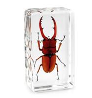 resinas de ratinho venda por atacado-Fortune Stag Beetle Specimen Resina De Acrílico Embutido Inseto Educação Brinquedos Paperweight Rato Transparente Crianças Novo Tipo de Biologia Kits de Ciência