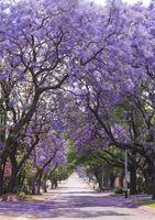 ingrosso albero fiore viola-Sfondo di fiori viola del percorso del giardino alberi del fiore stampato Primavera fiori all'aperto Scenic Kids bambini ragazze foto sparare sfondo