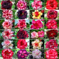 sementes de flores planta de rosas venda por atacado-Genuine Adenium obesum Sementes, 12 Pcs Desert Rose Sementes de Flores, 100 + tipos misturados bonsai plantas Perenes para casa jardim