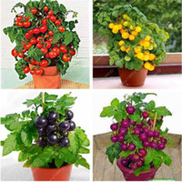 Wholesale gardening food - 100 pcs bag Bonsai Tomato Seeds, Delicious Cherry Tomato Seeds,Non-GMO Seeds Vegetables Edible Food Balcony Potted Garden Plant