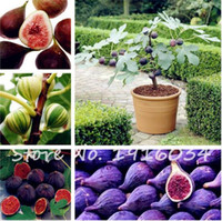 Wholesale Honey Homes - 50 Pcs Four Seasons Potted Sweet Honey FIG Seeds Balcony Vegetables Fruits Bonsai Plant DIY Home Garden,Easy to Grow,Mixed Color