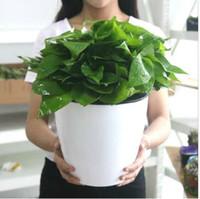 ingrosso piante in vaso di plastica-Vasi da fiori per piante da appartamento in plastica per piante da giardino