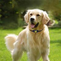 köpek izci yaka toptan satış-Z8-Bir Pet GPS Tracker Köpek Kedi Yaka Suya Dayanıklı GPS Geri Çağırma Fonksiyonu USB Şarj Evrensel Köpekler Için GPS İzleyici Anti-kayıp Bulucu NB