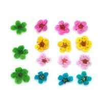 nuevas decoraciones de uñas al por mayor-Nuevo 12 colores 3D decoración real seco flor seca para gel UV acrílico uñas arte DIY