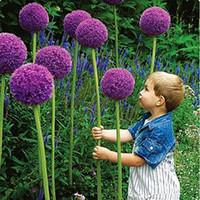 посадка лука оптовых-Редкий цветок 100 / мешок гигантский лук (Allium mushroom) семена красивые цветы bonsai растения домашний сад бесплатная доставка