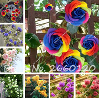 Wholesale Big Beautiful Homes - Big Sale 100 PCS Rare Rose Tree Seeds, 24 Colors to Choose Beautiful Flower Seeds Potted ,Balcony & Yard Plant DIY Home Garden