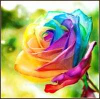 ingrosso rose decorazione della stanza-Pittura diamante 5d fai da te colorato speciale rose soggiorno piccolo moderno europeo punto croce pittura appesa a parete decorazione pittura