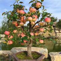 Wholesale Red Apple Trees - 30pcs bag Bonsai Apple Tree Seeds rare fruit bonsai tree-- red delicious apple seeds garden for flower pot planters