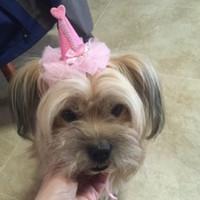 ingrosso clip di cappello dell'arco-Cute Cat Dog Clip di capelli con perla Bow Lace Pet cappelli fatti a mano Puppy Head Band vendita diretta in fabbrica 5jh BB