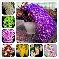 Free Shipping 100 Pcs   Packing Dendrobium Seeds Potted Flower Seed Variety Complete The Budding Rate 95% Mixed Colors Sementes