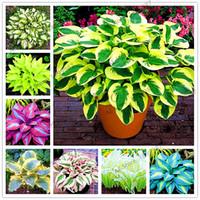 Wholesale Ornamental Grass Plants - Buy Cheap Ornamental