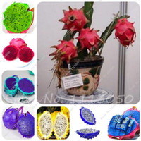 Wholesale Garden Dragons - 100 Pcs Bag Rare Mini Pitaya Seeds Bonsai Tree,Rainbow Flesh Dragon Fruit Seed,Perennial Sementes Potted Plants for Home Garden