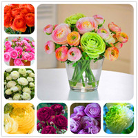 Hot Sale 100 Pcs Ranunculus asiaticus Flower Seeds For Home & Garden DIY Plants Persian Buttercup Seed Flower Bulbs Free Shipping