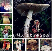 Wholesale Very Funny - 100 Pcs Bag Organic Delicious Mushroom Seeds, Funny Fungus Succulent Plant, Edible Health Seeds Very Easy To Grow For Home Garden