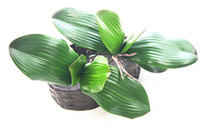 Wholesale flowers decoration real greens resale online - Real Touch Butterfly Orchid Leaf Artificial Pu Green Plant Leaves Succulents Home Decoration